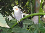 27_Bird_Aviary.jpg