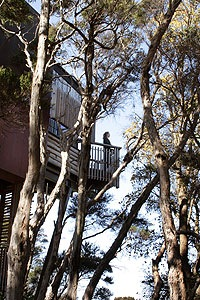 hapuku-lodge-trees