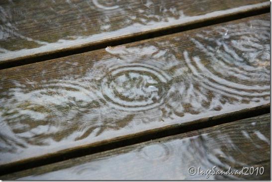 regn og torden i skoven 002