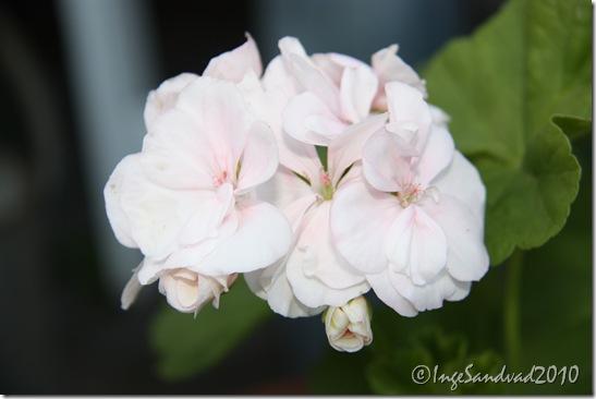 blomster 020