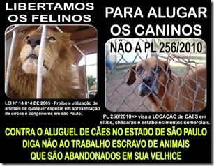 caes_aluguel02