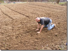 Dad planting onions