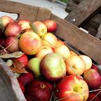 New England Harvest photo