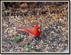 WrappingUpWeekBird