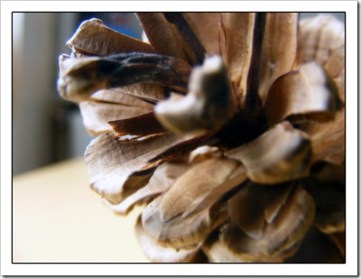pinecone_by_simonruddphotos