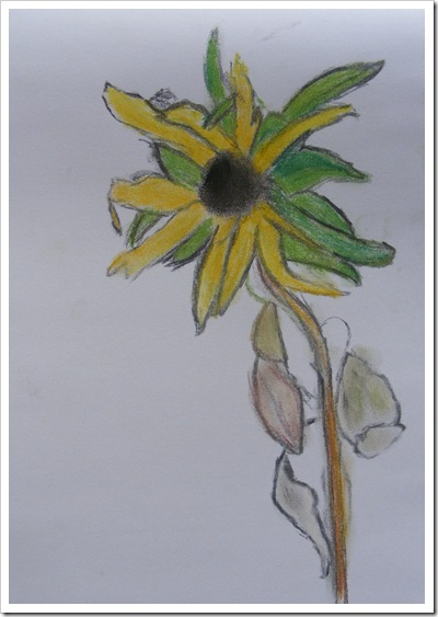 sunflower charcoal and pastels