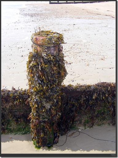 seaweed-small