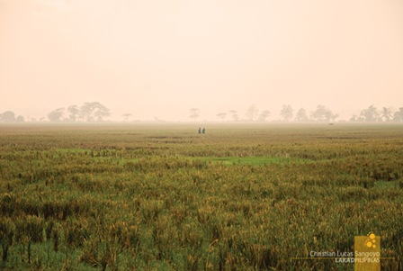 Two Farmers on a Misty Afternoon at the Cabanatuan Ricefields