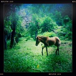 A Pony Near Corregidor's San Jose Chapel