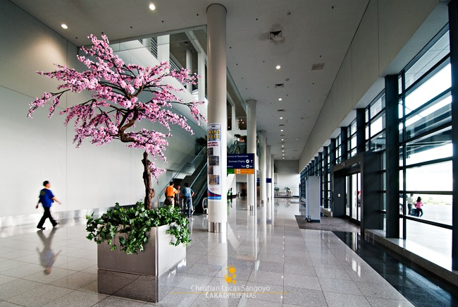 Cherry Blossoms at the NAIA III Terminal
