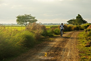 A Biker Whizzing Through the Candaba Wetlands