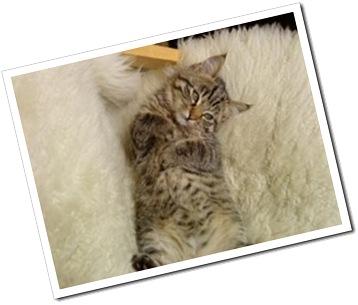 Sötaste kissen i stan! ;-)