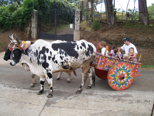 Photo Friday   Ox Carts, the Last True Costa Rican Tradition