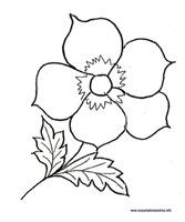 flores_34