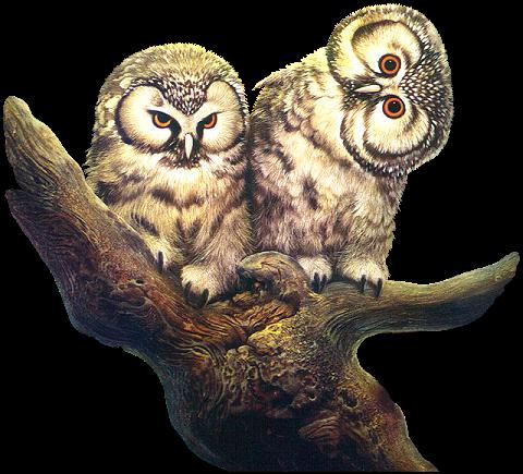 búhos imagenesifotos (4)