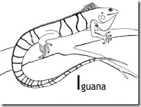 iguana blogcolorear (10)
