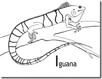 iguana blogcolorear (9)