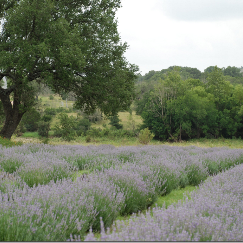 Provence in Texas: A Giveaway!!!