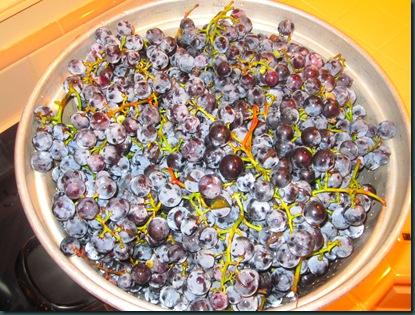grape pressing 003