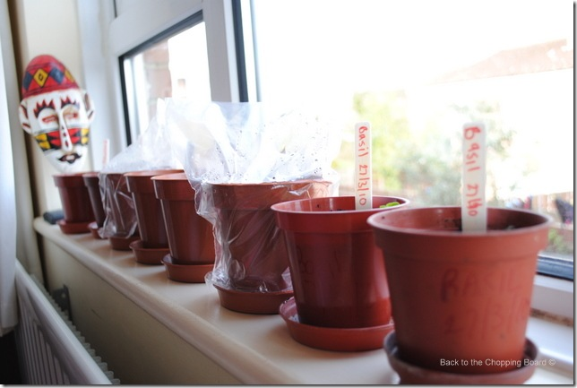 Pots on the windowill