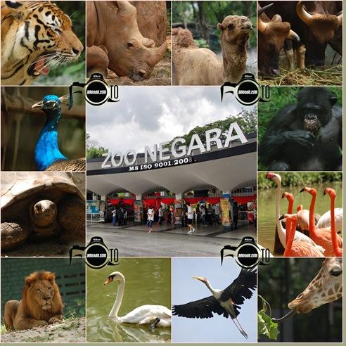 zoo negara copy