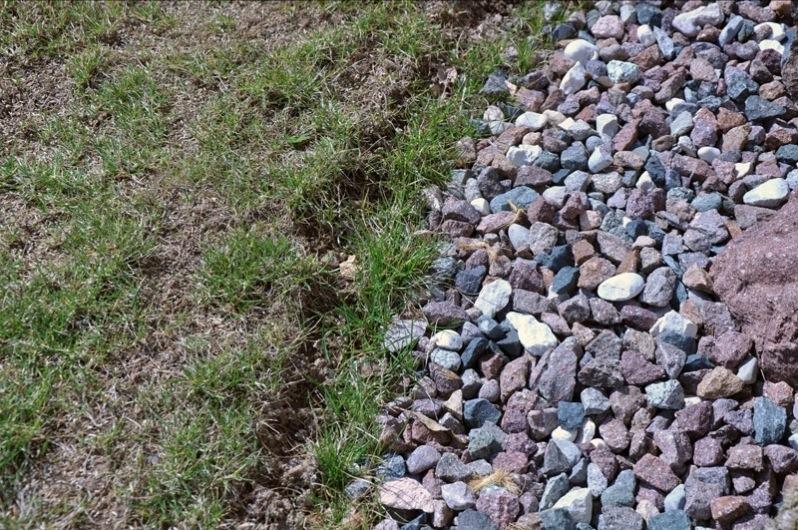 Squarciomomo l 39 erba capricciosa - Quando seminare erba giardino ...