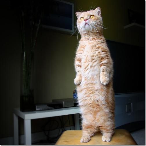 fotos de animais fofos e engraçados more freak show blog (18)