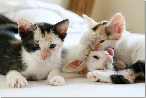 fotos de animais fofos e engraçados more freak show blog (23)