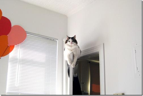 fotos de animais fofos e engraçados more freak show blog (29)