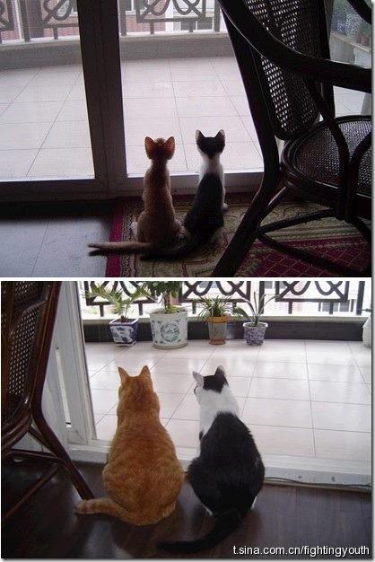 Ontem e Hoje Gatos