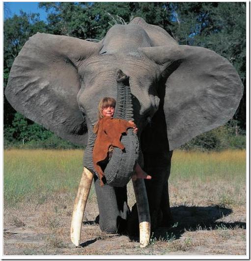 tippi e seu amigo elefante