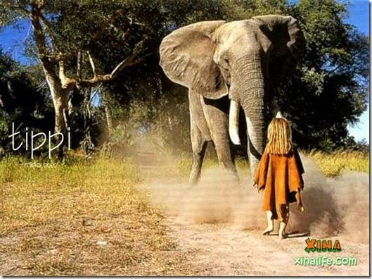 Book livro Tippi pequena garota e sua amizade com Animais selvagens  (12)