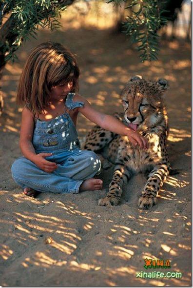 Book livro Tippi pequena garota e sua amizade com Animais selvagens  (11)