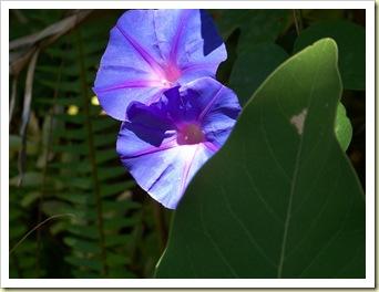 fleur Hyères 1