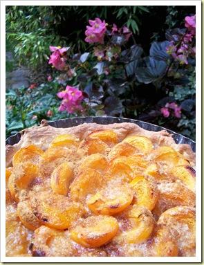 tarte abricots