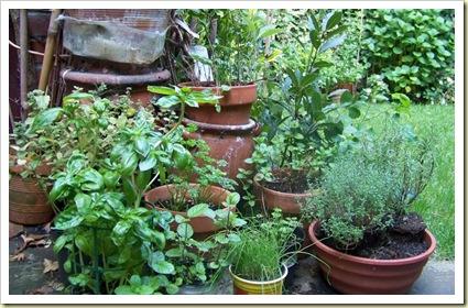 herbes jardin