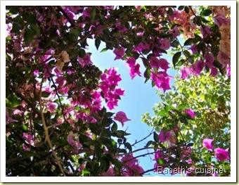 fleurs vacances