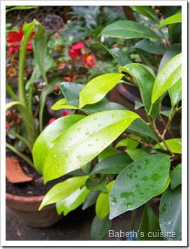 pluie sur les feuilles