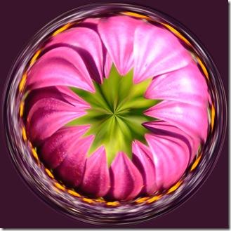 purple daisy swirl
