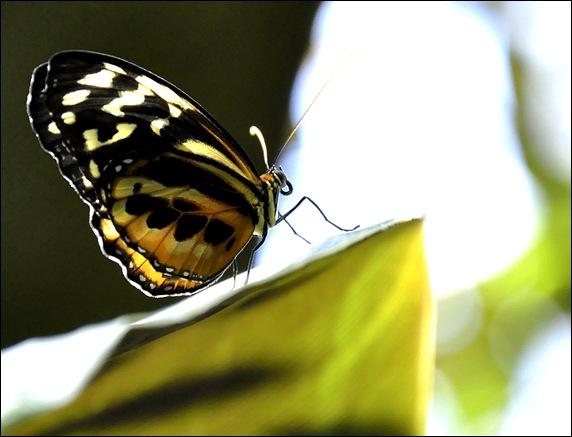 butterfly macro2