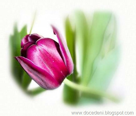 tulipatop