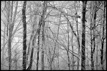 snowflakes 018