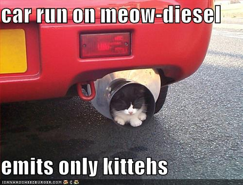 car run on meow-diesel emits only kittehs