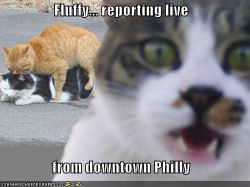 Fluffy... reporting live from downtown Philly