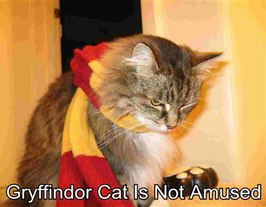 Gryffindor Cat Is Not Amused