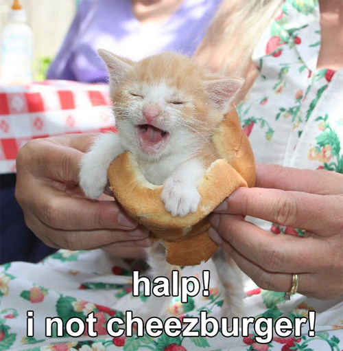 halp! i not cheezburger!