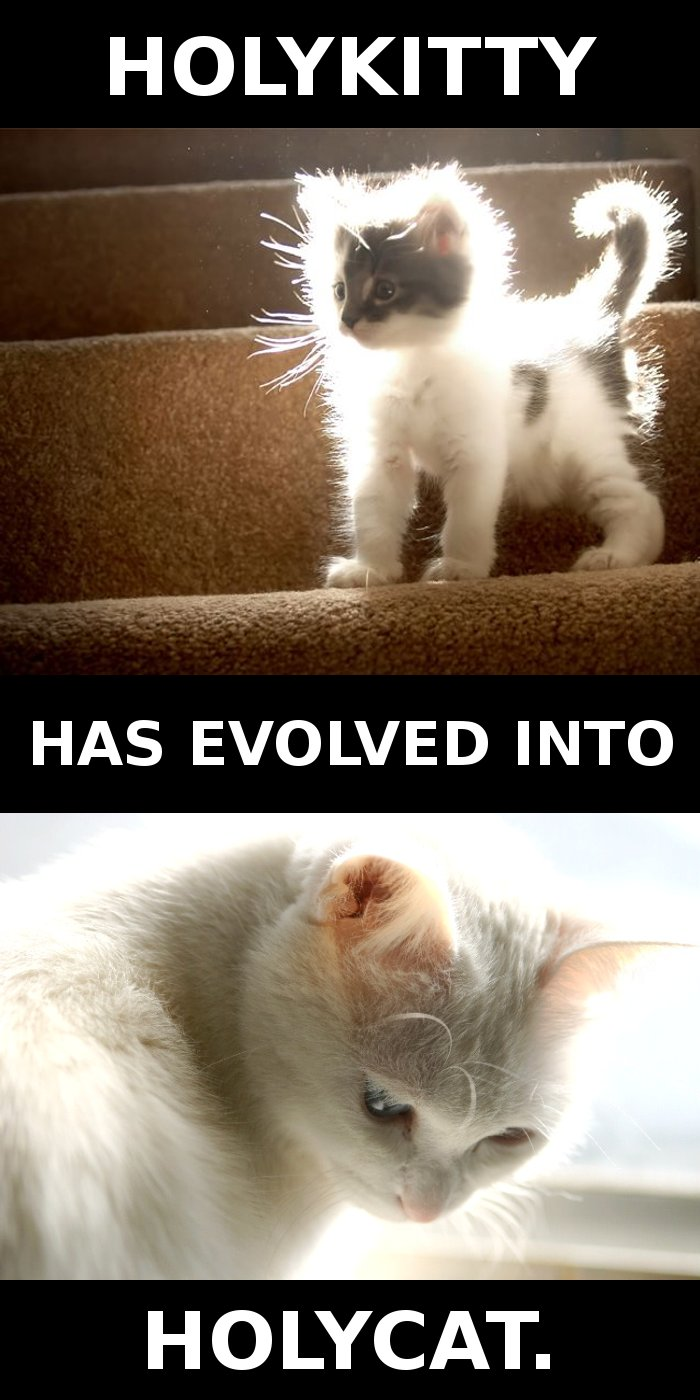 HOLYKITTY HAS EVOLVED INTO HOLYCAT