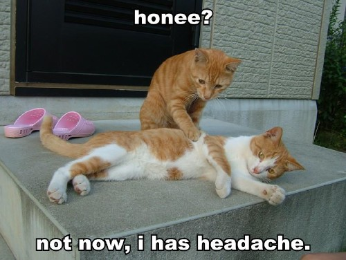 honee not now, i has headache