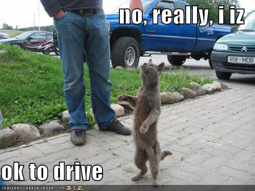 no! really! i iz ok to drive