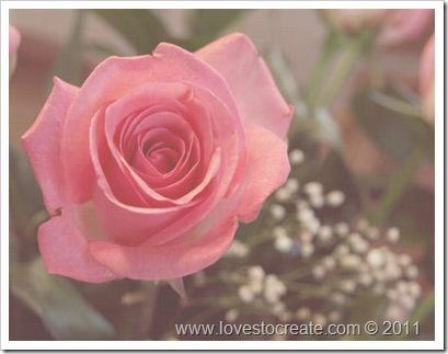 Rose 5.8.11